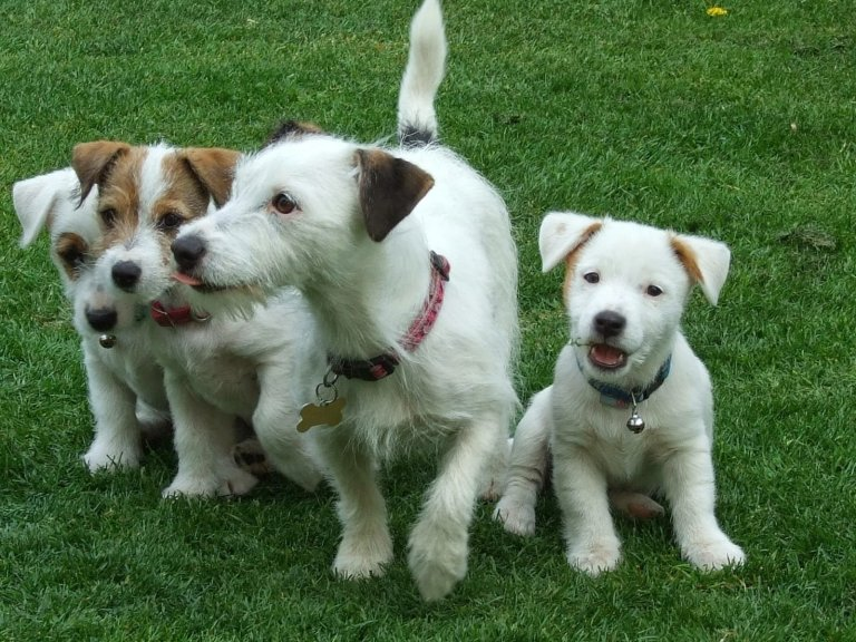 Read more about the article Bringing a new dog home & 1 tip that will make both of your lives easier