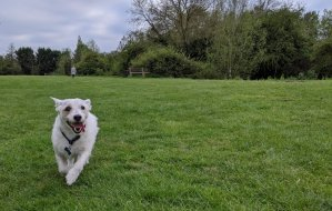 how to stop a Jack Russell barking