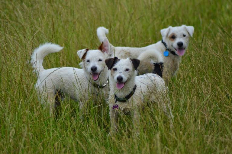 Read more about the article How to stop a Jack Russell barking – What is your dog actually saying?