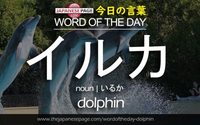 Beginner Word of the Day – イルカ [dolphin]