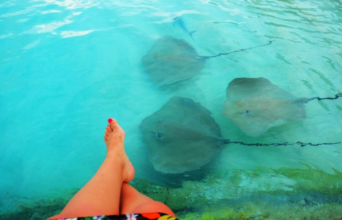 Chilling with my stingray buddies at Jumeirah Vittaveli