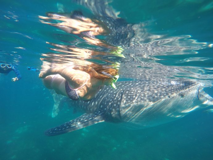Snorkeling with Whale Sharks in Philippines