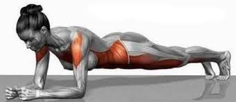 How To Do The Basic Plank