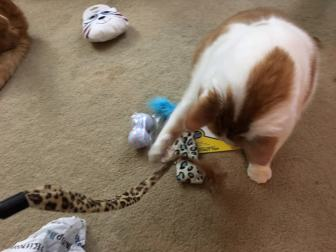 Buster with wand toy