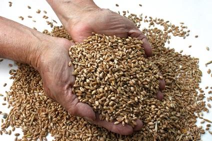 Properties of Wheat