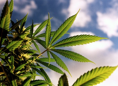 Smoking Marijuana (Cannabis, Joints)