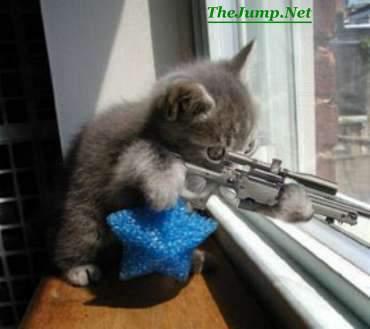 Sniper Neko