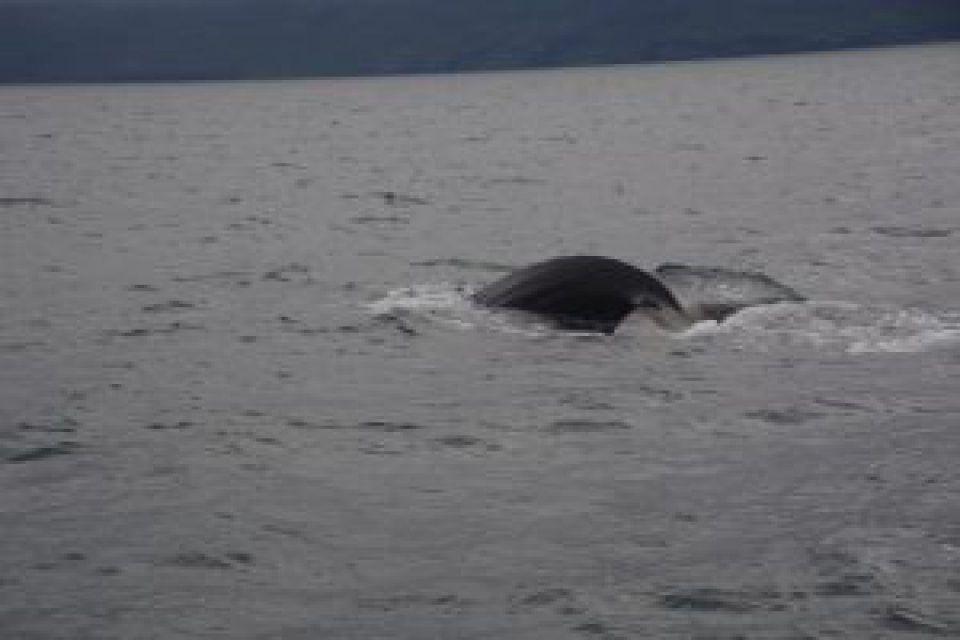 Was haben Wale mit der 'Ndrangheta zu tun?
