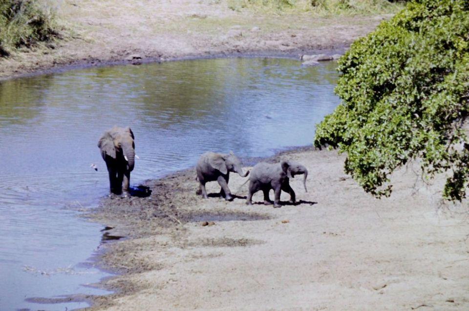 Elefanten am Fluss, kasaan media, 1988/2021