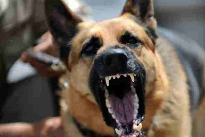 Latest News Of Kashmir, Breaking News Kashmir, dog menace in kashmir, two women injured,kangan,dogs in srinagar, dog terror in baramulla