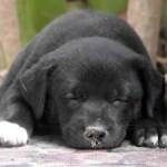 4 Alternate Sleep Cycles You've Probably Never Heard Of