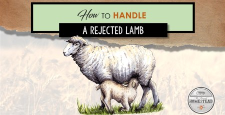 How to Handle a Rejected Lamb