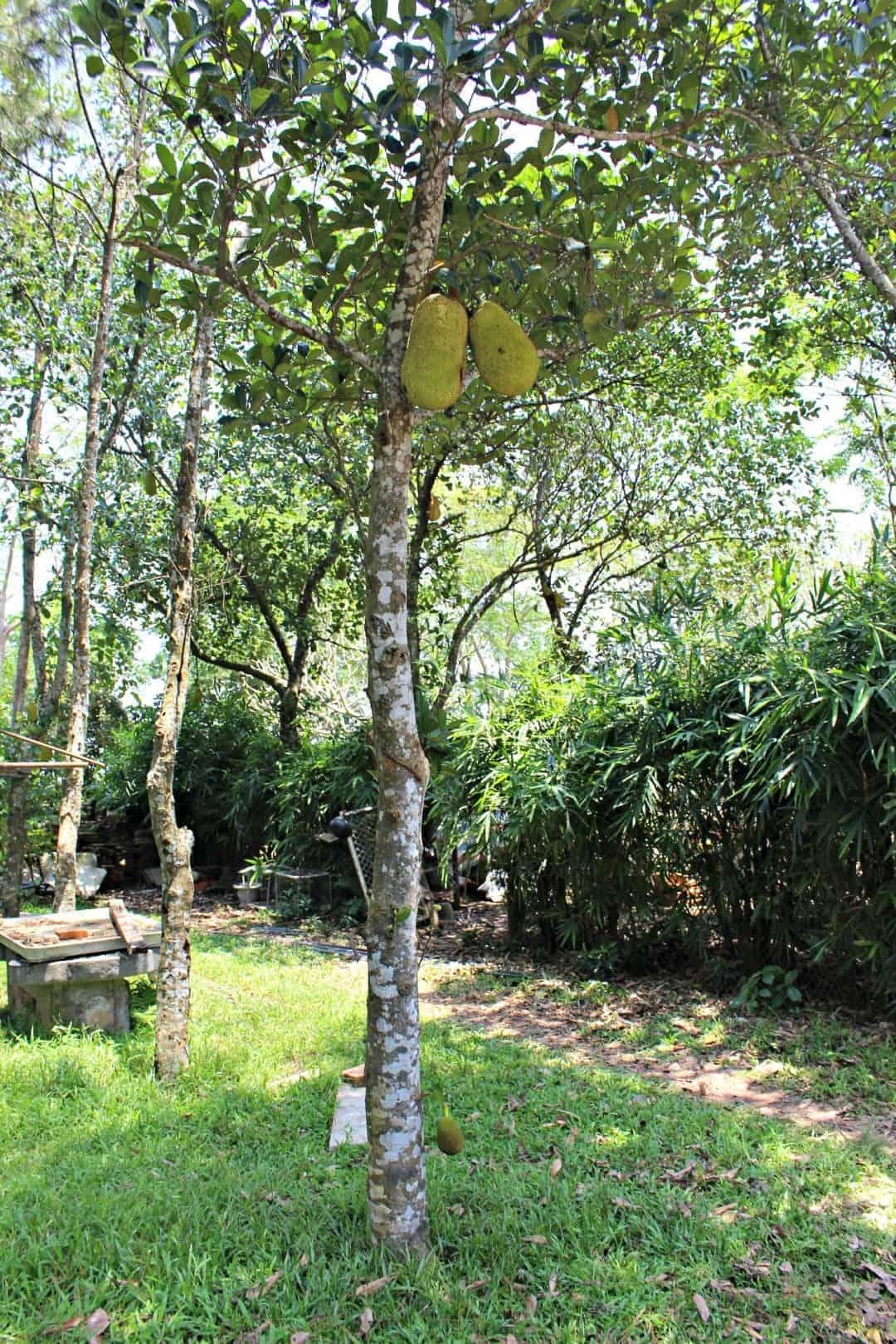 jacks fruit market bay city vietnam part iii hue the kiwi country ...