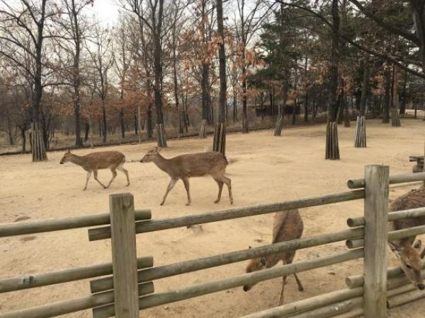 Seoul forest top10 Parcs - blog coree du sud - the korean dream.jpg 2