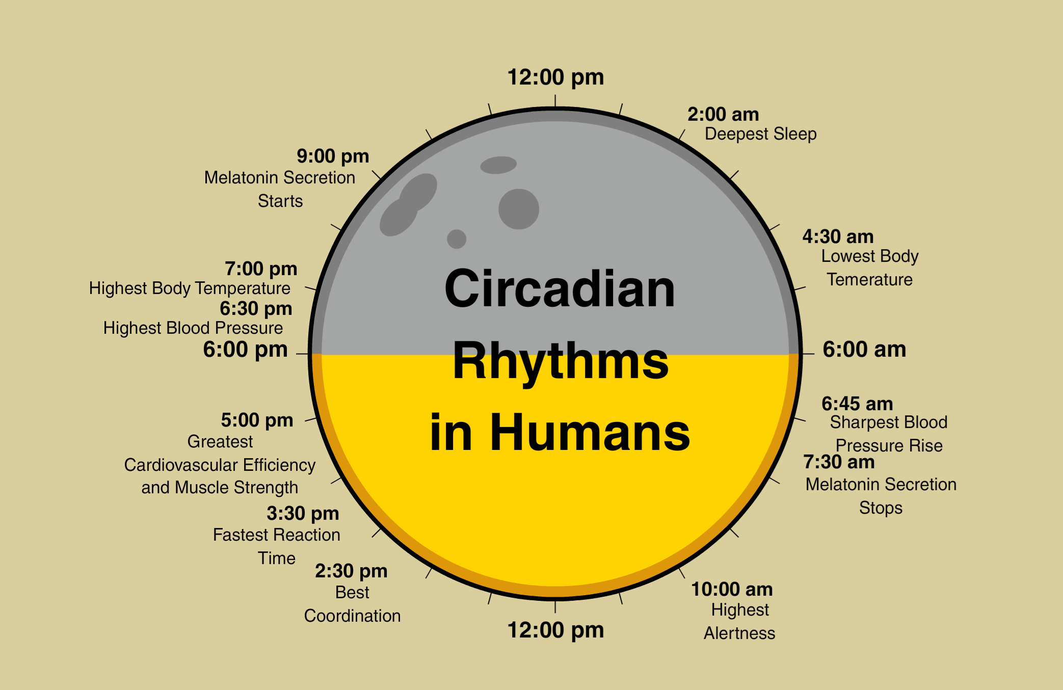 Circadian rhythms for preventing leaky gut