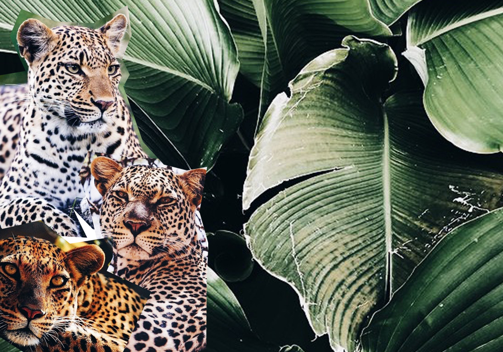 Notable Awards Nominees | The Lady-like Leopard