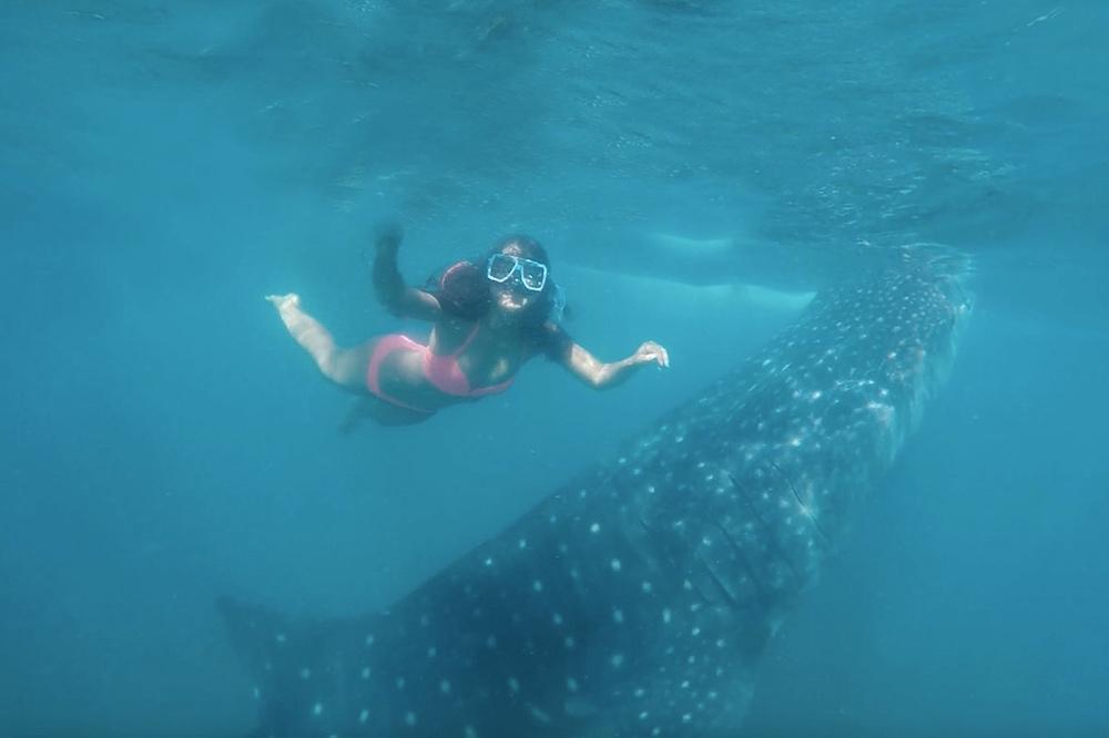 Philippines: Swim with Whale Sharks in Oslob, Cebu