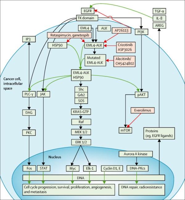 Targeting brain metastases in ALK-rearranged non-small ...