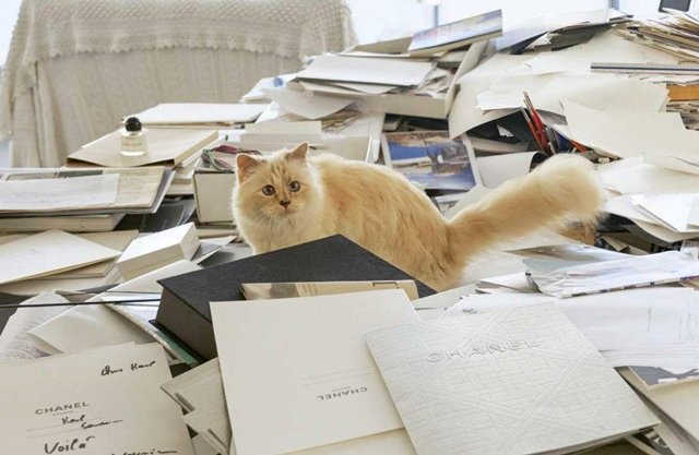 Choupette sitting on a big fat stack of letters