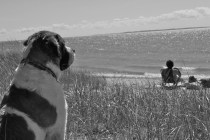 Lake Michigan, Eastport beach, Skyler the St Bernard | www.thelandrovers.com
