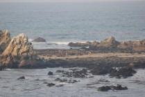 IMG_2454 western oregon coast, the landrovers
