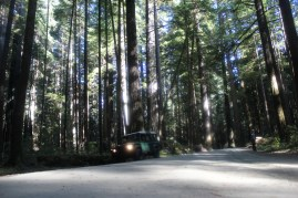 IMG_2568 northern California, The Redwoods, the landrovers