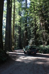 IMG_2597 northern California, The Redwoods, the landrovers, 1984 land rover defender