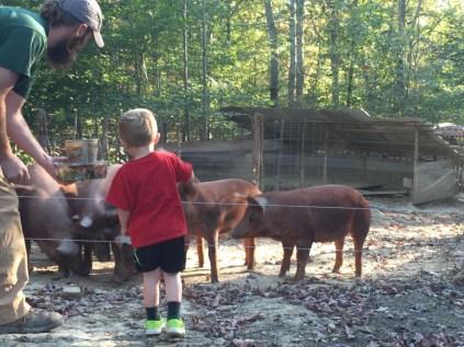 pastured pork_Jackson Station Livestock_feeding the girls with Papa