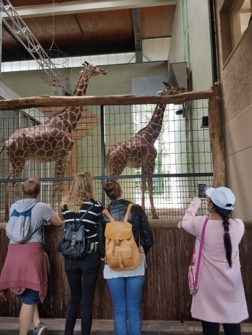 Giraffes and Fabian (Team VI), Jana, Anika