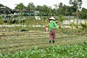 Agricultural worker, Pheuksa Garden, Vientiane Province