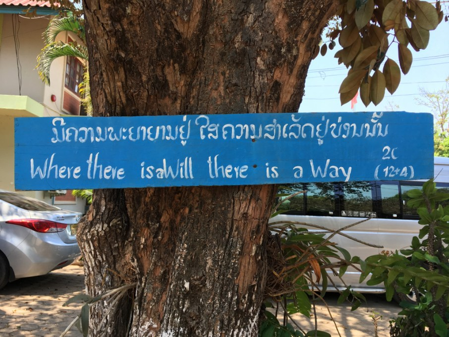 """Tree on campus of the """"Teacher Training College"""" in Savannakhet - hopefully another new partner before too long!"""