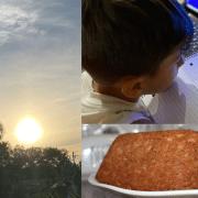 Quarantine Blog #2