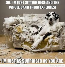 dogs exploding sofa