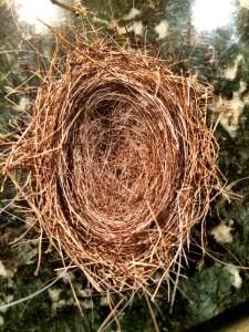 nest with Bullseye's hair