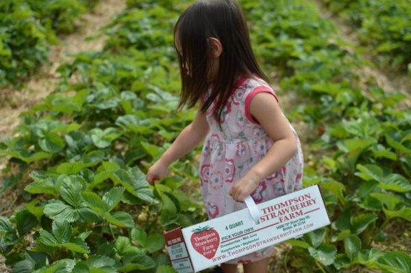 Summer Fun- Strawberry Picking With The Kids