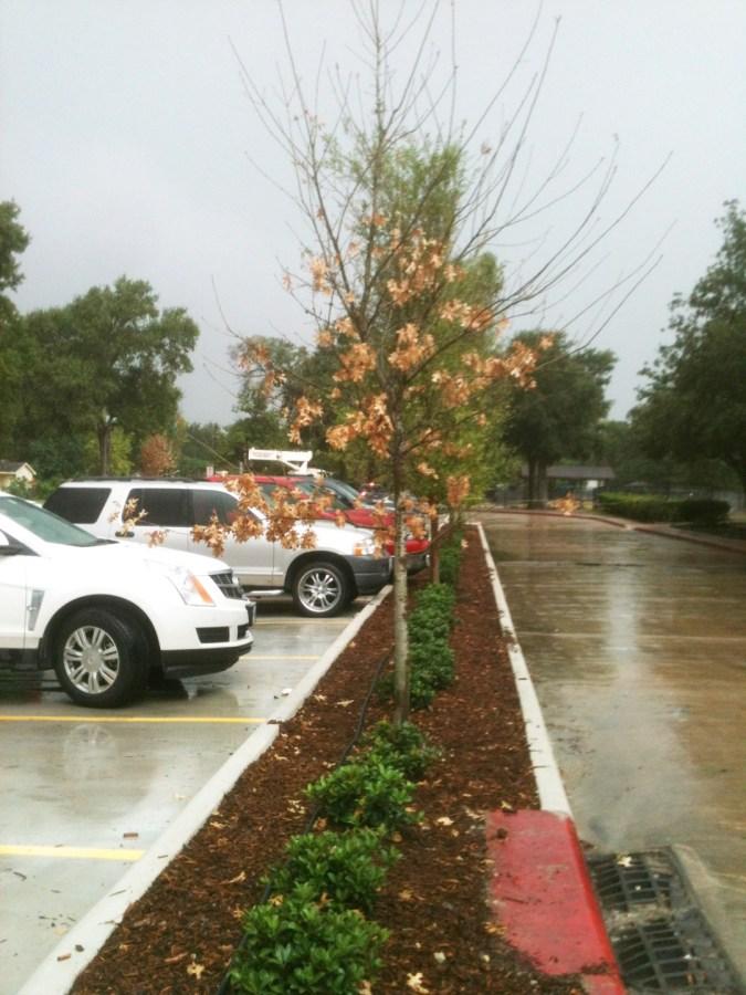New Parking Landscape