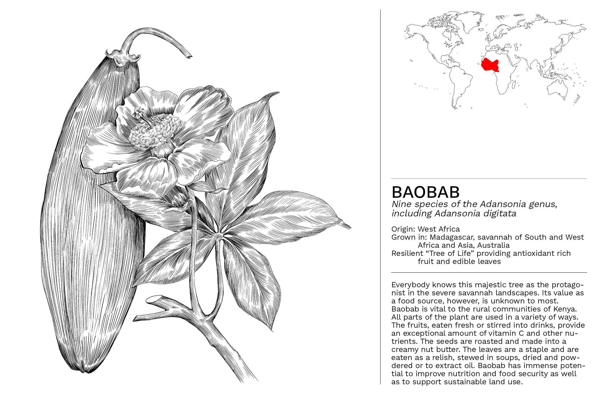 BAOBAB_Slideshow