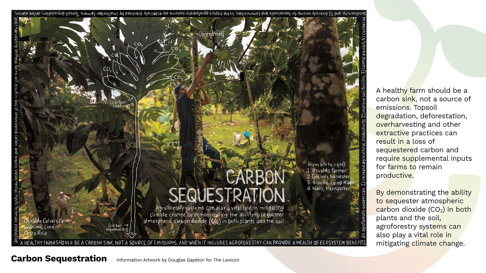 carbon_sequestration_gayeton