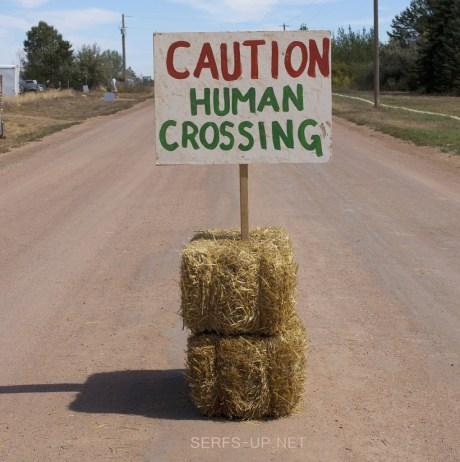 human-crossing5