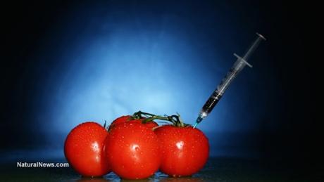 Tomatoes-Gmo-Syringe-460