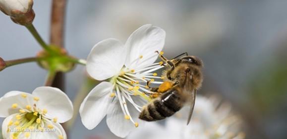 Bee-Pollenate-Flower 4 7 16