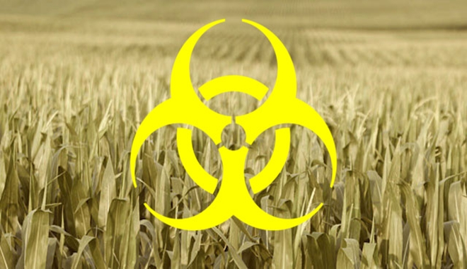 Corn-Fields-Crops-Agriculture-Monsanto-Biohazard