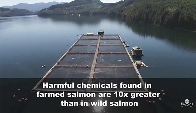 a salmon farm