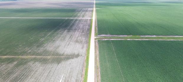 flooded crop field 2