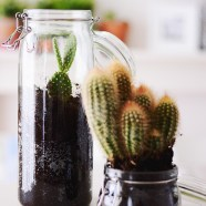 Topcombo: cactussen in weckpotten