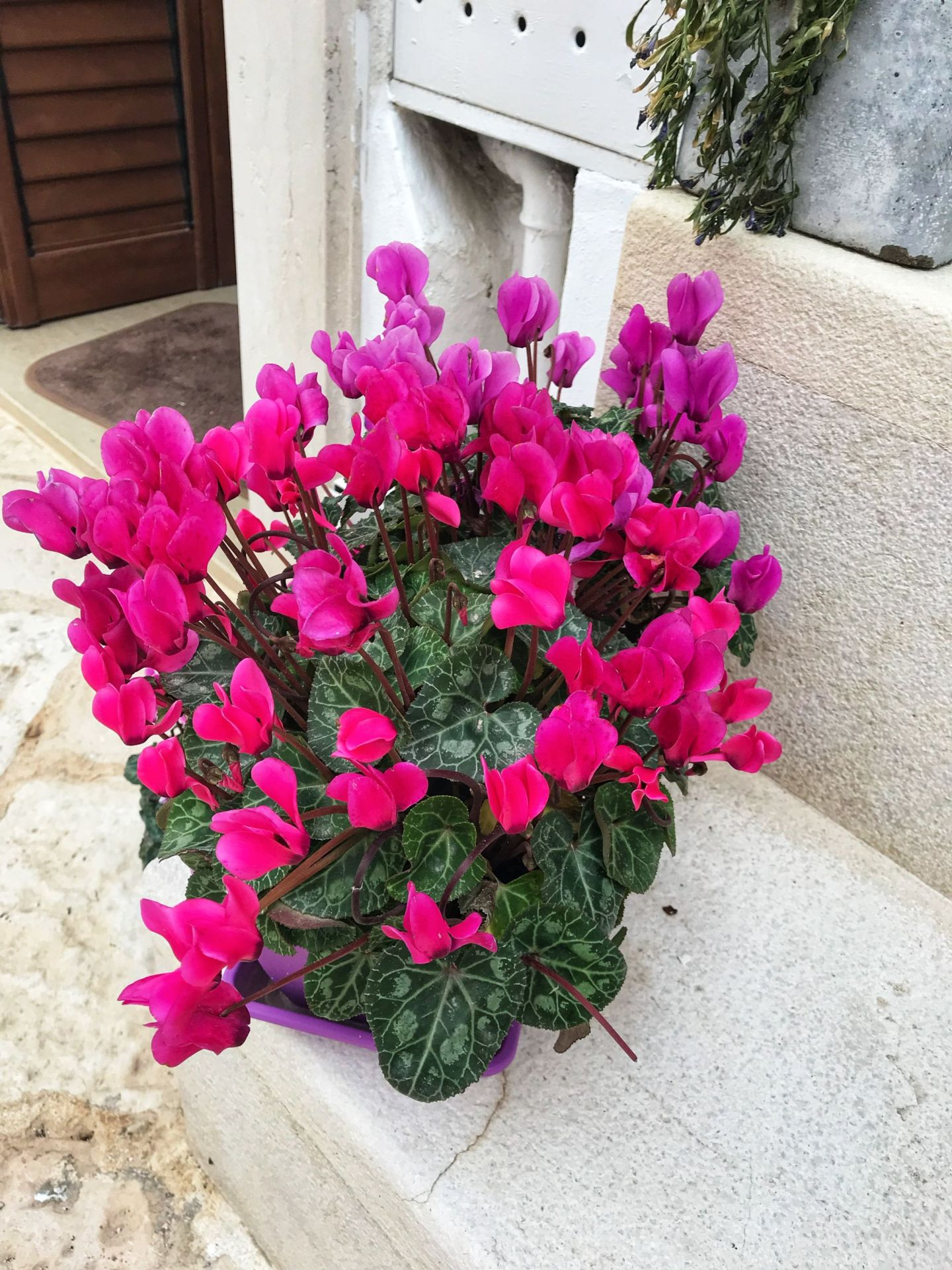 Brightly coloured flowers adorning Puglia Southern Italy