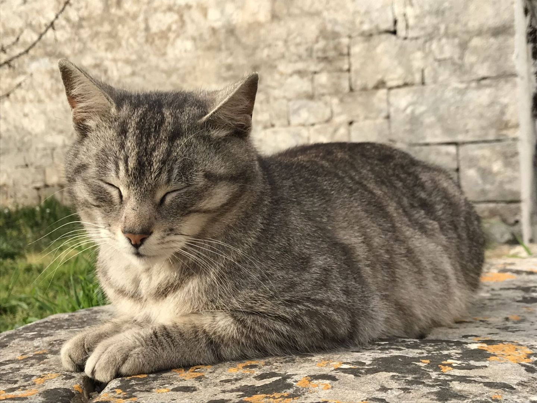 Feline Cat Friend in Alberobello Puglia Southern Italy