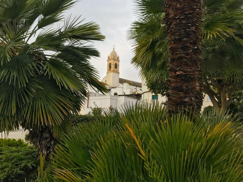 Palm tree view in Alberobello