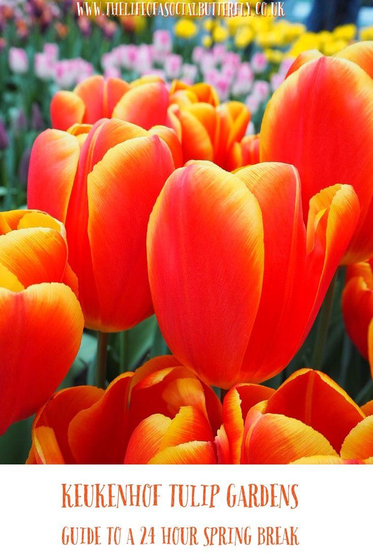 Pinterest 24 Hour Break Dutch Keukenhof Tulip Gardens