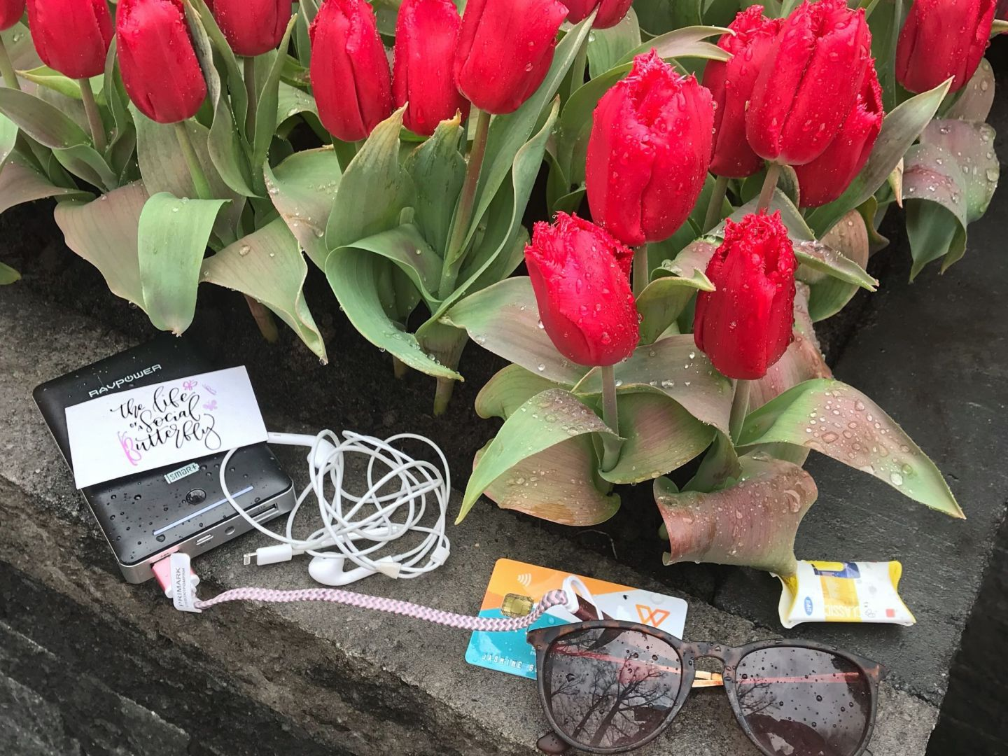 Travel Essentials including WeSwap Card among the Dutch Tulips